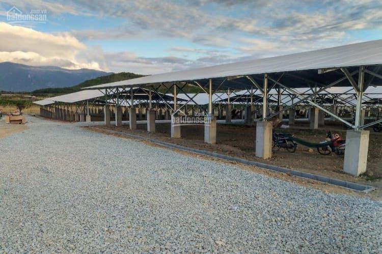 Bán trang trại nông nghiệp công nghệ cao kết hợp điện mặt trời