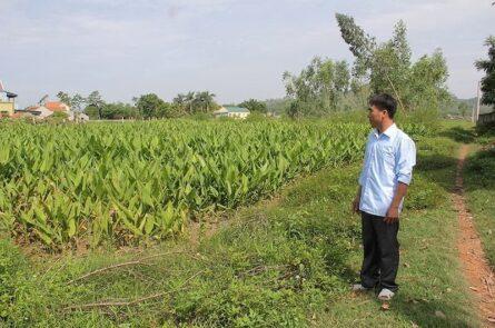 Mua bán đất nông nghiệp
