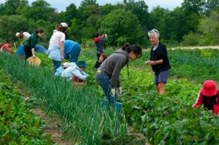 Mô hình phát triển farmstay trào lưu mới