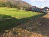 Bán đất nông nghiệp
