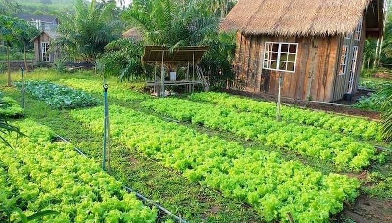 chuyển đất nông nghiệp sang đất ở