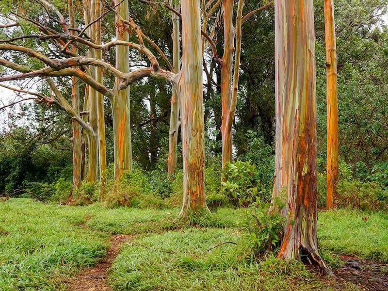 quy định về đất trồng cây